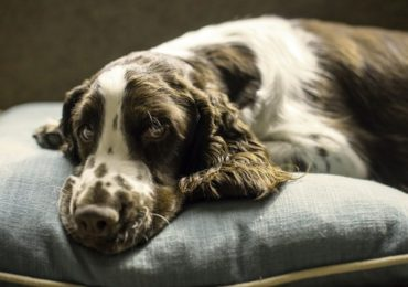 Best Large Dog Beds: Tips and Advice